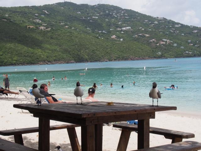 Kreuzfahrt Reisebericht Caribbean Princess Karibik